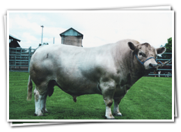 Mandalong Studs Beef Cattle Breeding - Square Meaters